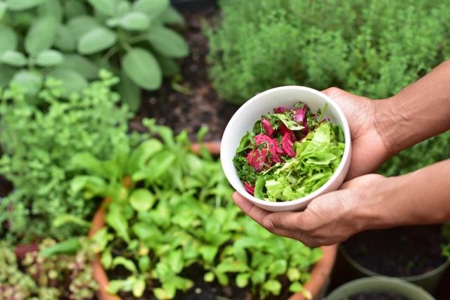 Frutas e Legumes em Jardim